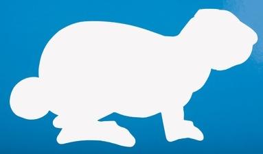 Der berühmte Kein-Ohr-Hase hat Nachahmer